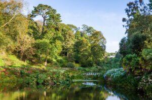 Trebah Gardens near Falmouth